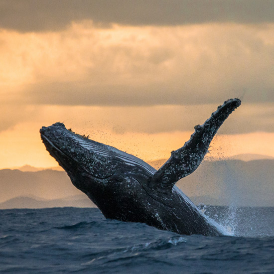 Whale watching tours from the Atlantic Oceanside Hotel in Bar Harbor, Maine
